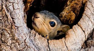 squirrel_solatrim